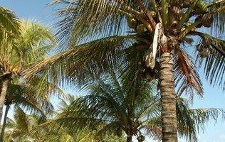Jardín Hotel Maya Caribe Beach House